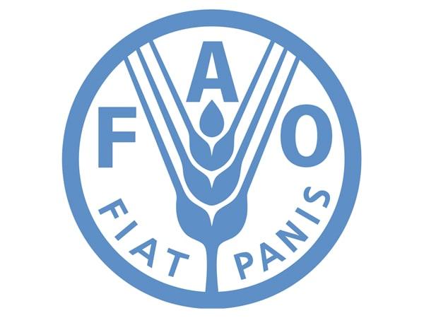 ФАО: производство пшеницы и кукурузы вырастет, а риса — снизится