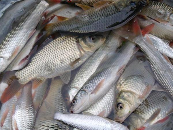 Ирак, Турция и Молдова полюбили нашу рыбу