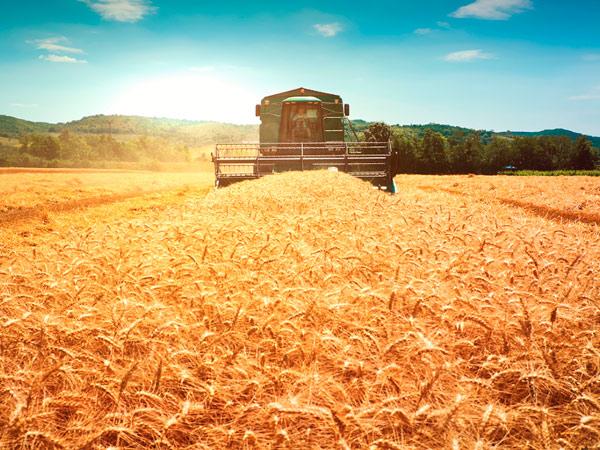 Земледельцы заканчивают собирать урожай