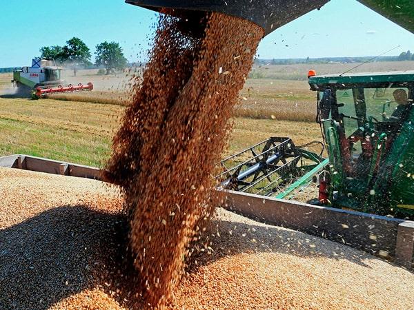 Сводка пшеничная: урожай, поставки, цены в регионах