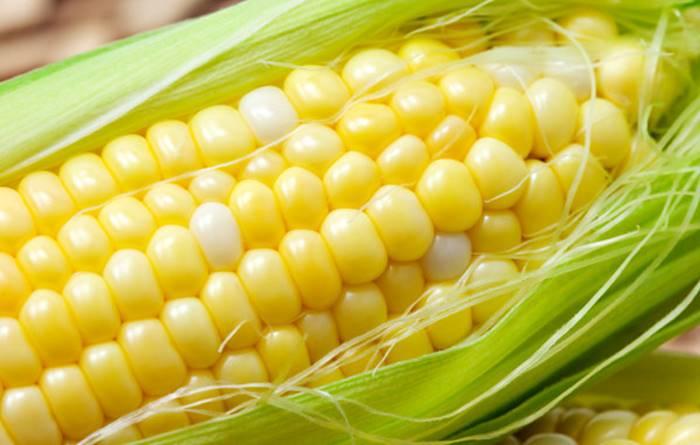 ГМ-кукурузу временно признали вне закона в Мексике