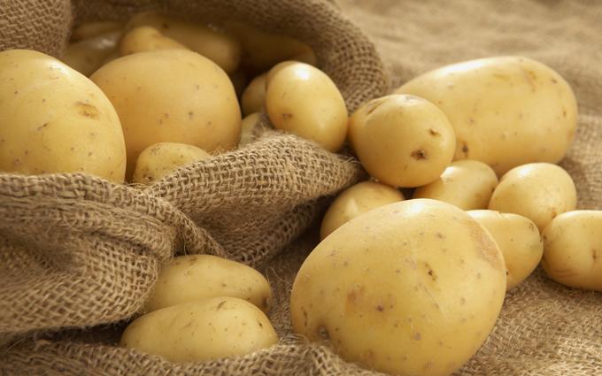 В Беларуси будут испытывать трансгенный картофель