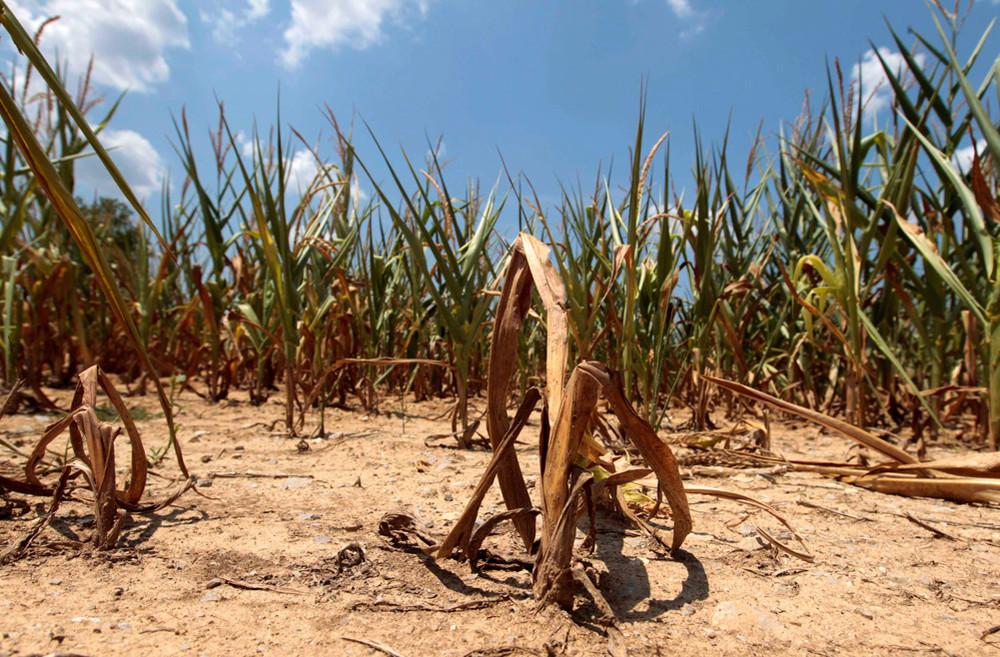 Засуха меняет Бразилию